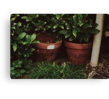 Plant pots Canvas Print
