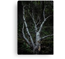 Green Forest Canvas Print