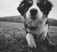 Puppy by Hudolin
