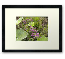 Small Patch of Heather Framed Print