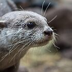 Otter by CallyM