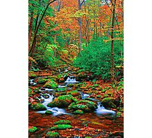 AUTUMN,ROARING FORK Photographic Print