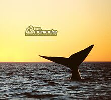 Sunset Whale watching in Peninsula Valdes by Alejandro Avampini