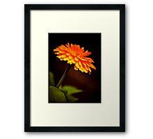 Canada Flower Framed Print