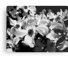 Black & White Dogwood Metal Print