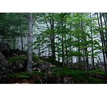 A forest from almost ghostly appearance Photographic Print