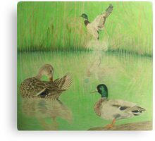 Ducks Take to Water Canvas Print