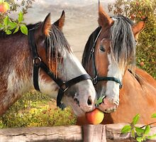 An Apple A Day ! by Trudi's Images