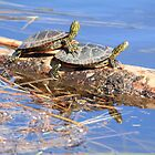 Turtle Love by Rochelle Smith