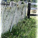 white fence by SharronS