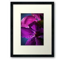 Tranquil Petals Framed Print