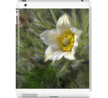 two white blossoms iPad Case/Skin