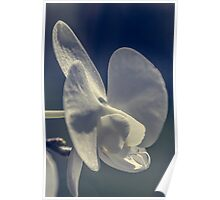 flower - blossom Poster