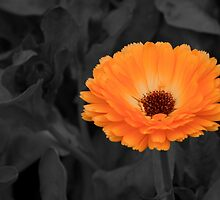 Oranged! by Lee  Gill