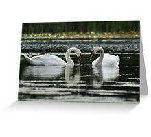 Swan love is forever..... Greeting Card