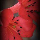 Petal Beauty by Martice