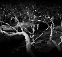 Mangrove Wisdom by Martice