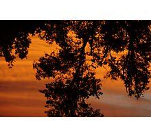 Crimson Banksia Photographic Print