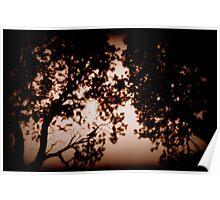 Bashful Banksia Poster
