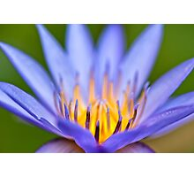 Beautiful Water lily  Photographic Print