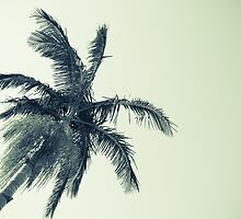 Palm tree against sky low angle point of view monochrome faded image. by brians101