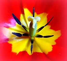 Tulip detail by ©The Creative  Minds
