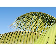 Palm frond detail against sky Photographic Print