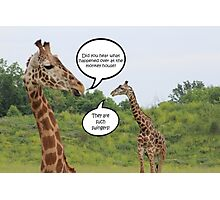 Giraffes Having a Chat Photographic Print
