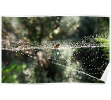 Silver orb weaving spider Poster