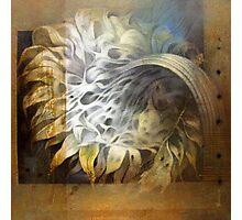 Sun Flower II Photographic Print
