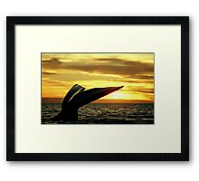 Sunset Whale tail in Peninsula Valdes Framed Print