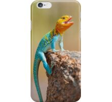 Male Eastern Collard Lizard, Wichita Mountains, Oklahoma iPhone Case/Skin