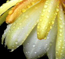 epiphyllum VII Sticker