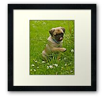 Pug's Not Drugs Framed Print