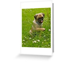 Pug's Not Drugs Greeting Card