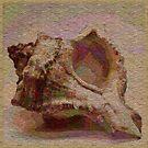Conch Shell by Dana Roper
