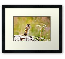 Little Chipper Framed Print