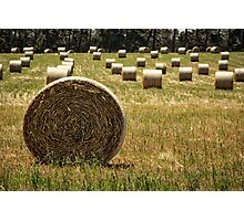 Hay Field Photographic Print