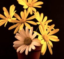 White and Yellow Daisies in a Red Pot Sticker