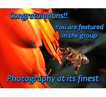 Photography at its finest - Banner: Cape Honeybee with Aloe Photographic Print