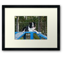 Clever OLLIE goes to Unitec..........!! Framed Print