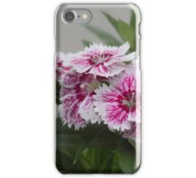 Sweet William growing in a garden iPhone Case/Skin