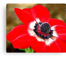 Sweet Serenity, Red Anemone Canvas Print