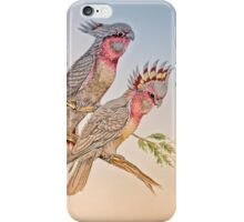 Australian Cockatoo 011 iPhone Case/Skin