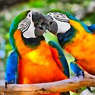 Love Bites - Parrots in Silver Springs by Christine Till  @    CT-Graphics