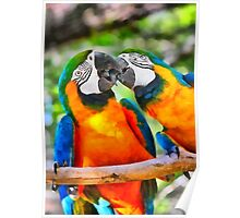 Love Bites - Parrots in Silver Springs Poster