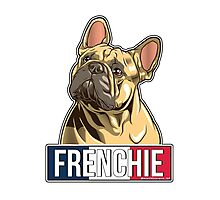 French Bulldog  Photographic Print