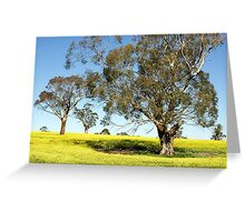 Eucalypts in Canola Greeting Card
