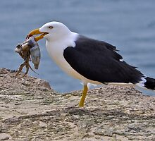 Catch of the day by Ian Berry