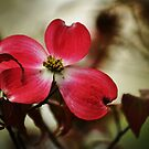 I want you to stay....Red Dogwood!!! by Poete100